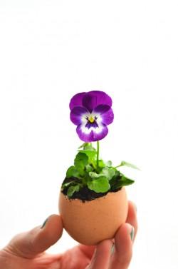 DIY Blumen im Ei