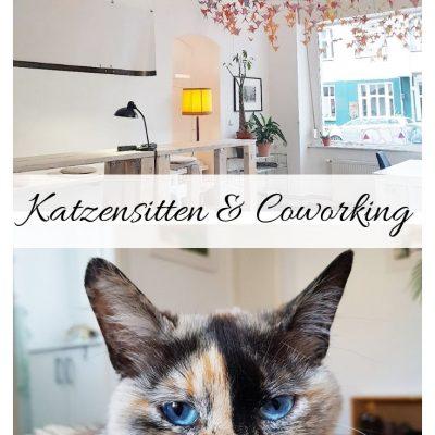 Katzensitten Coworking App Test Erfahrung Croissant Trustedhousesitters